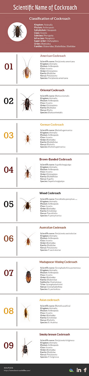 Scientific Name Of Cockroach